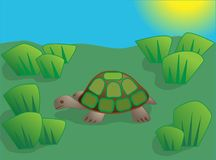 Little turtle in a meadow Royalty Free Stock Photos