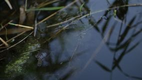 Little Turtle in water stock video