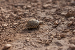 Little turtle into the wild Stock Image