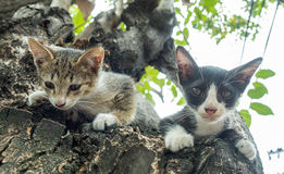 Little two cute kittens try to climb down from tree. Selective focus on one's eye Stock Photography