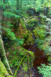 Little Union River Gorge Michigan. Moss covers the landscape at Little Union River Gorge of Porcupine Mountains Wilderness State Park in Michigan Royalty Free Stock Photography