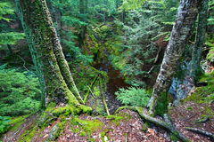 Little Union River Gorge Michigan Royalty Free Stock Photos