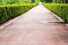 Little väg med röda Ixora Fotografering för Bildbyråer