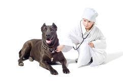 Little vet listens a  dog. Little cute vet listens to a stethoscope dog Stock Photo