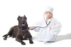 Little vet Royalty Free Stock Images