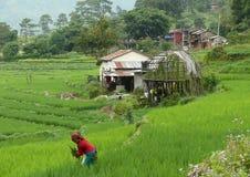 Little village near Besisahar. Woman working on rice field in Nepal - Annapurna trekking Royalty Free Stock Photography