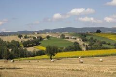 Little village on summer field stock image