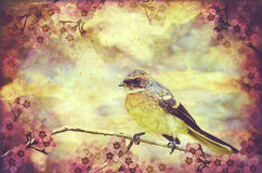Little Vintage Songbird Royalty Free Stock Photography