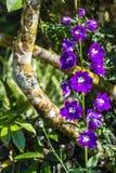 Little violet flower Stock Photo