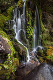 Little Waitonga Falls Royalty Free Stock Image