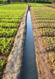 Little water canal. In vegetables field Stock Images