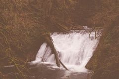 A little water stream in a wilderness. Water streaming down a little river in a wild forest royalty free stock images