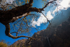 Little waterfall and ancient tree in Modi Khola valley. The Way to Machapuchare Base Camp ,Nepal. Royalty Free Stock Images