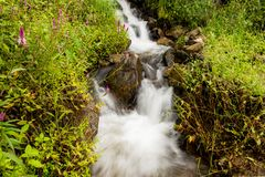 Little waterfall and Celosia argentea flower.  stock image