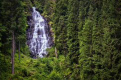 Little waterfall. In the heart of a fir tree forest Stock Image