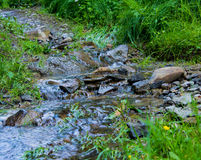 Little waterfall on way in the forest Stock Image