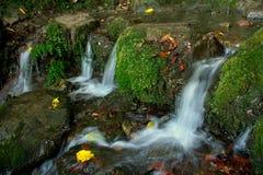 Little waterfalls. On Madeira island royalty free stock photos