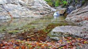 Little waterfalls in a peaceful wood. stock footage