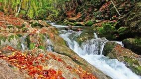 Little waterfalls in a peaceful wood. stock video