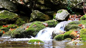 Little waterfalls in a peaceful wood. stock footage