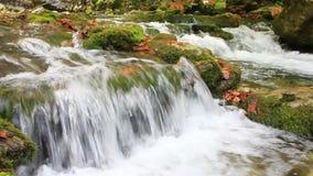 Little waterfalls in a peaceful wood stock video