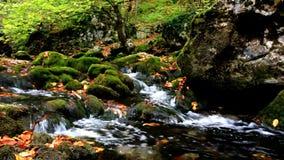 Little waterfalls in a peaceful wood stock footage
