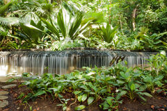 Little Waterful artificial in Singapore's Botanical garden. Little Waterful, fresh artificial water cascade with rainforest surroundings in Singapore's Botanical Stock Image