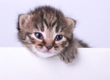 Little 2 weeks old kitten with a space board Royalty Free Stock Image