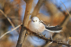 Little white bird flutters Royalty Free Stock Photo