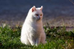 Little white cat on the garden Stock Photo
