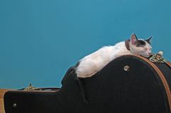 Little white cat on a guitar case Royalty Free Stock Photography
