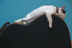 Little white cat on a guitar case Royalty Free Stock Image