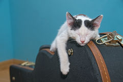 Little white cat on a guitar case. Ittle white cat asleep on a guitar case black, with a light blue background background Royalty Free Stock Photos