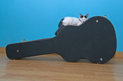 Little white cat on a guitar case. Ittle white cat asleep on a guitar case black, with a light blue background background Stock Photography
