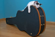 Little white cat on a guitar case Stock Images