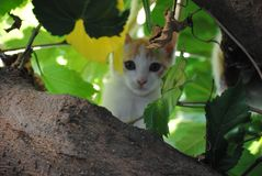 White cat, kitty, hided between the branches of a tree stock image