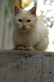 A little white cat lives in a hospital courtyard. And feeds on what visitors bring stock images