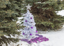 Little white christmas tree sitting among green spruce  trees Royalty Free Stock Photography