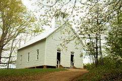 Little white church surrounded with dogwoods. Stock Images