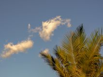 Little white cloud over a palm tree stock image