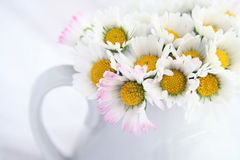 Little white daisies. A bouquet of little white daisies in a vase. Shallow DOF and slightly overexposed to emphasize, bright, cheerful, springtime atmosphere royalty free stock images