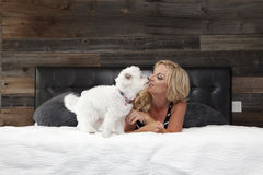Little white dog kissing woman. Little white puppy dog standing on a bed kissing his mistress, an attractive blond woman, dark wooden background Stock Image