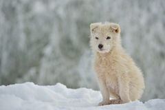 Little white dog outdoor in winter Stock Photos