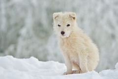 Little white dog outdoor in winter Royalty Free Stock Photos