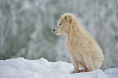 Little white dog outdoor in winter Stock Photo