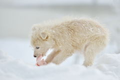 Little white dog outdoor in winter Royalty Free Stock Image