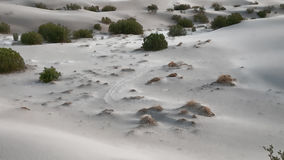 Little White Dunes Stock Images