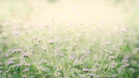 Little white flower  blooming fresh  sprinfg nature wallpaper. Background stock images