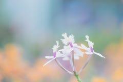 Little white flower Royalty Free Stock Image