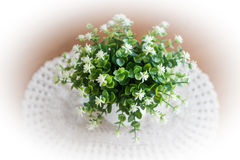 Little white flower in vase on wooden table Royalty Free Stock Image